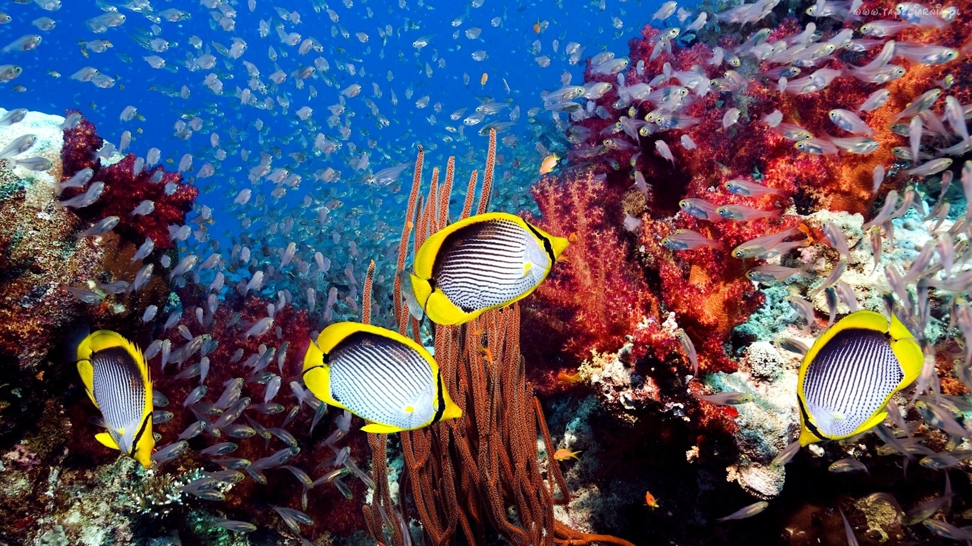 Coral Reef Wallpaper image hd