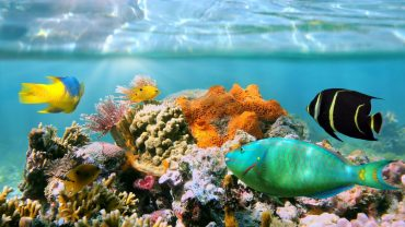 Coral Reef Download Wallpaper