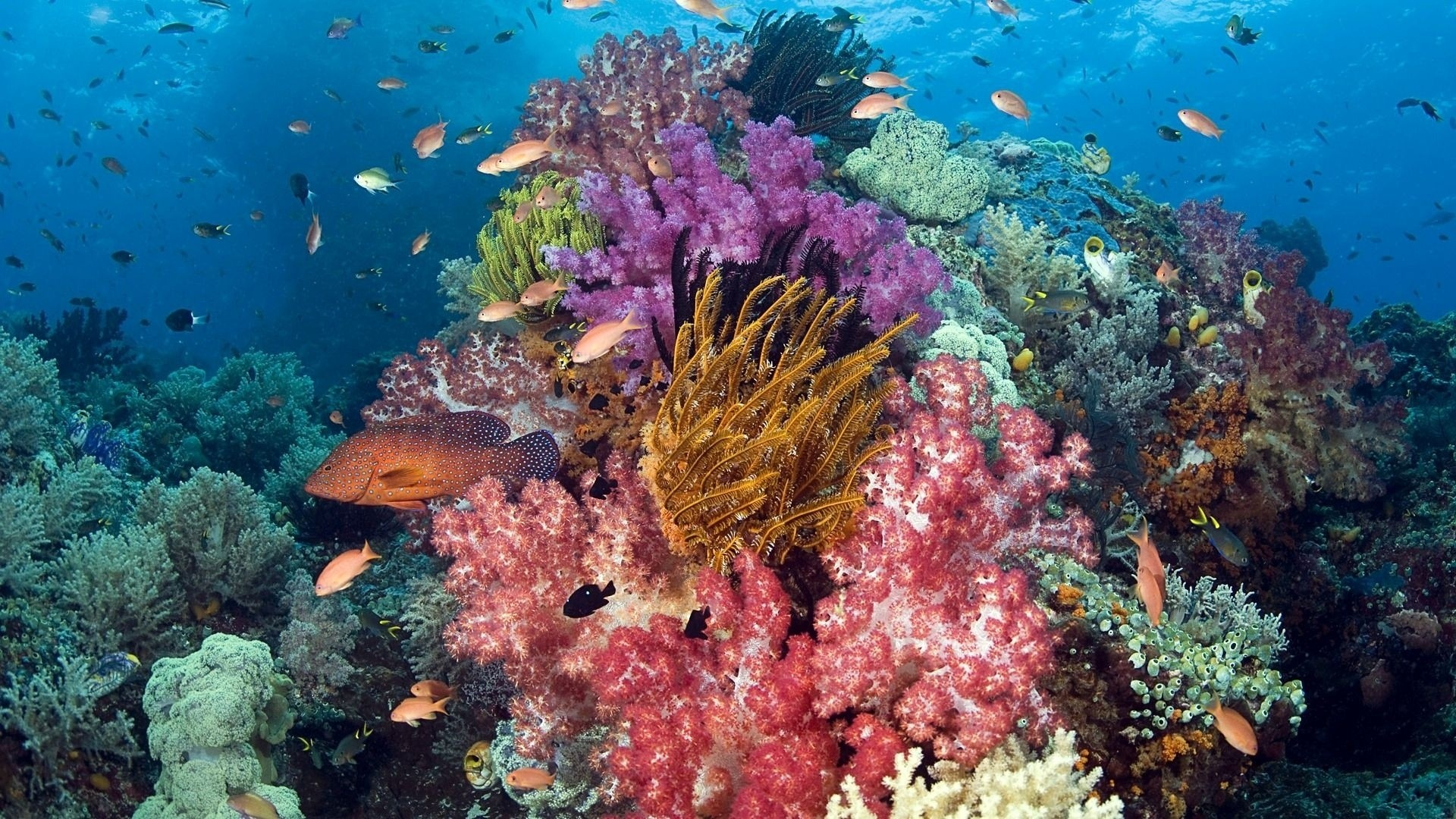 Coral Reef Wallpaper Picture hd