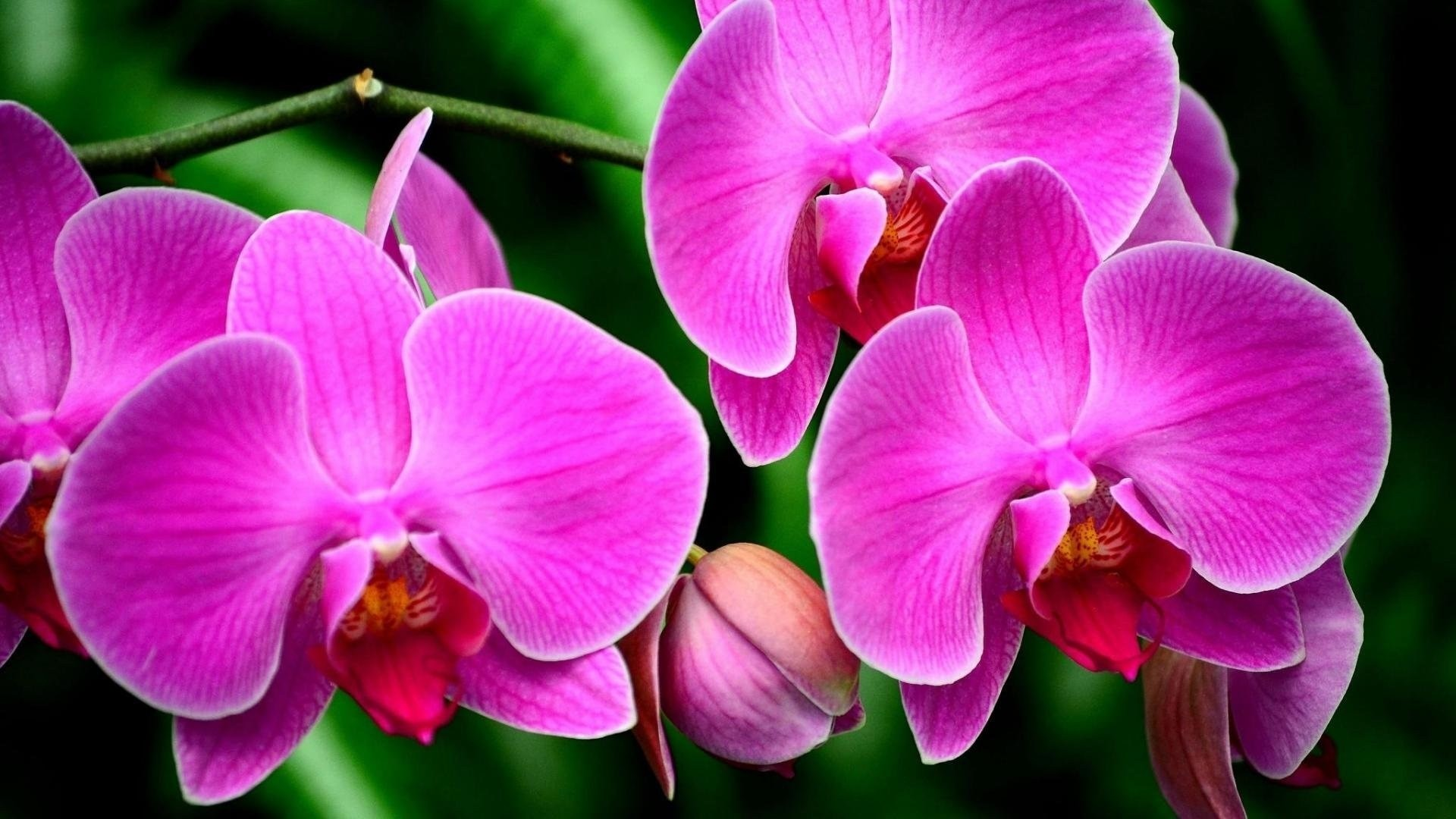 Orchid High Quality