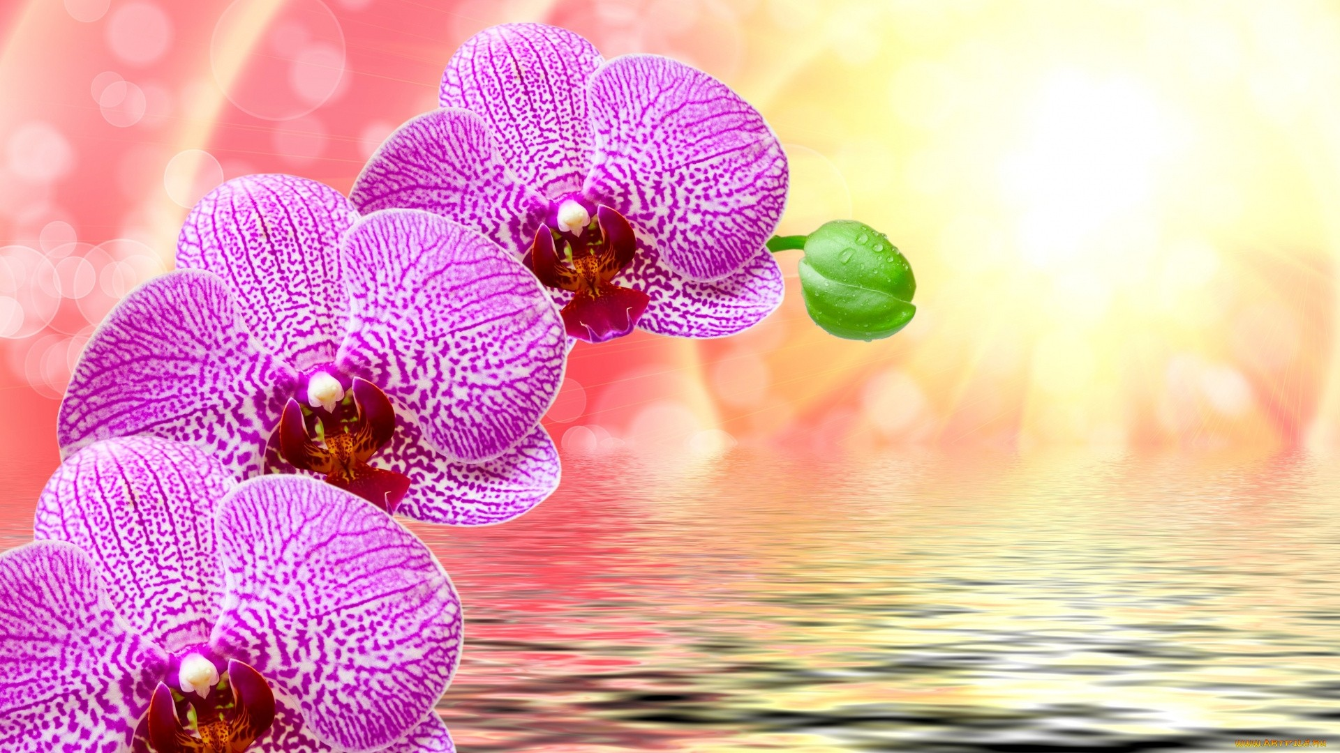 Orchid PC Wallpaper