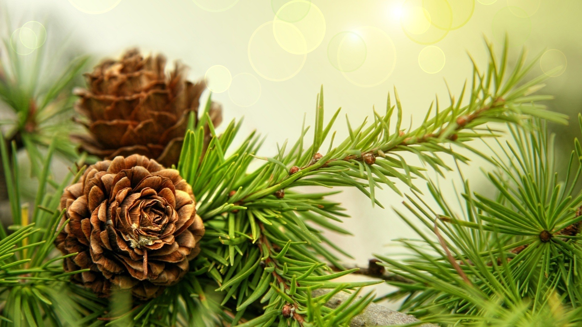 Pine Tree Wallpaper