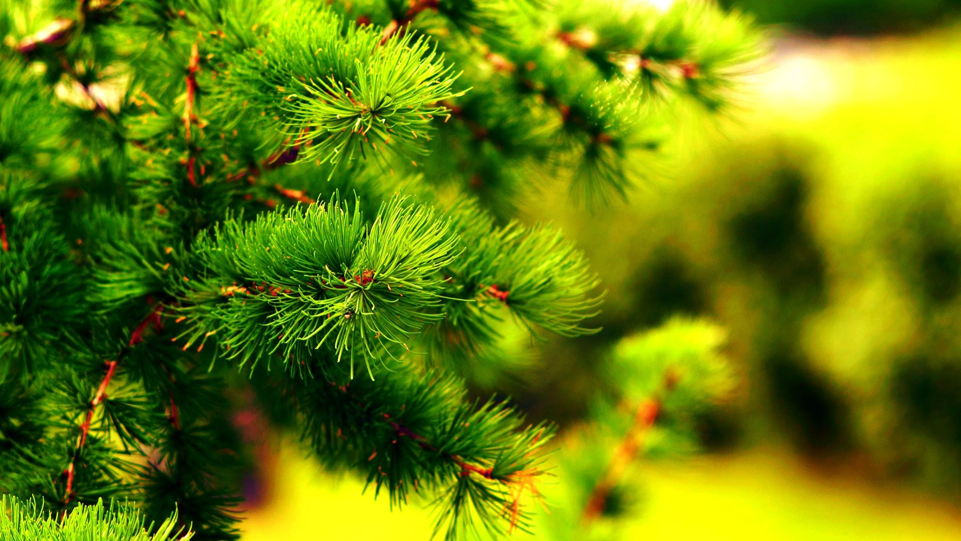Pine Tree PC Wallpaper HD