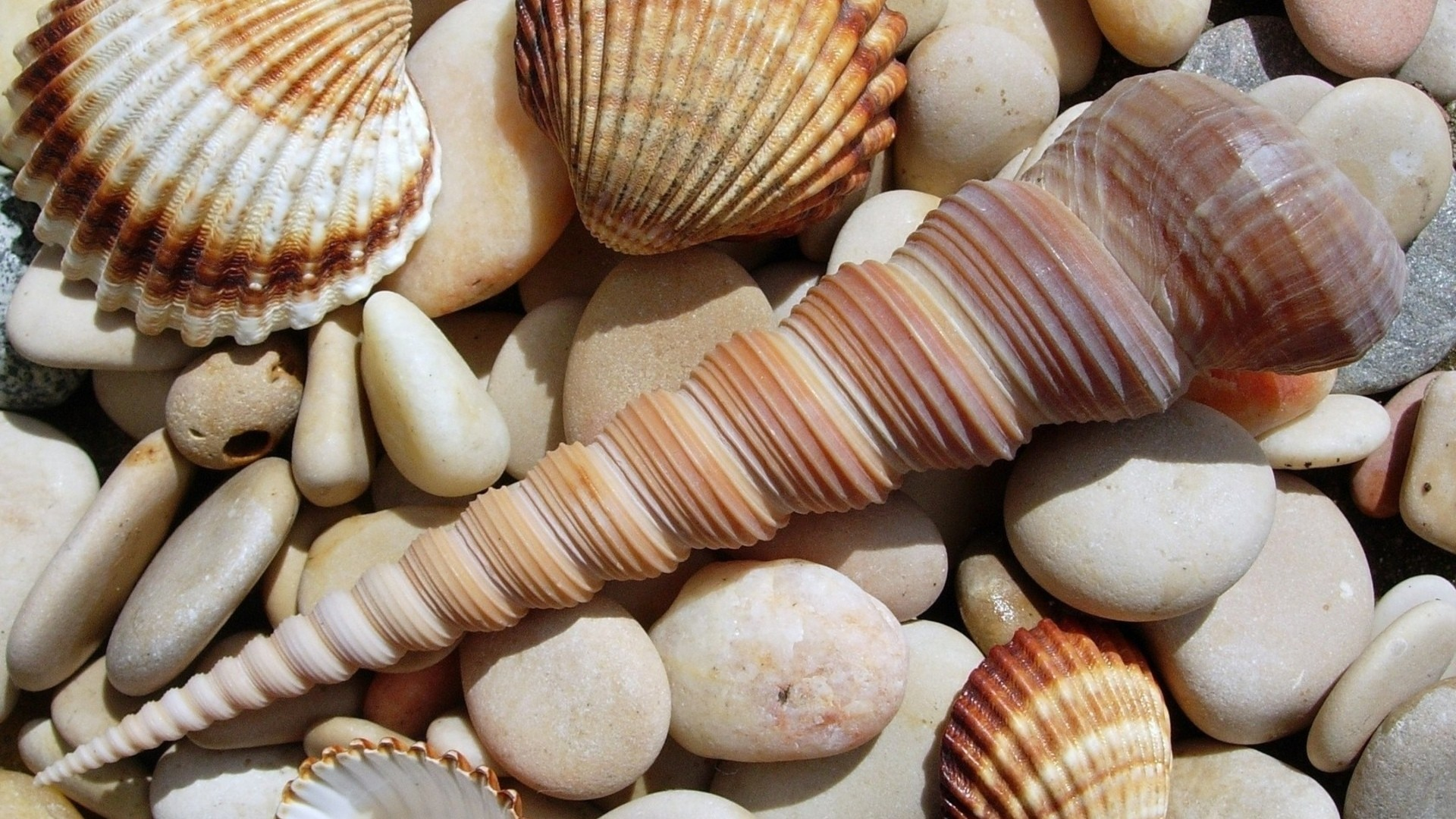 Seashell Wallpaper for pc