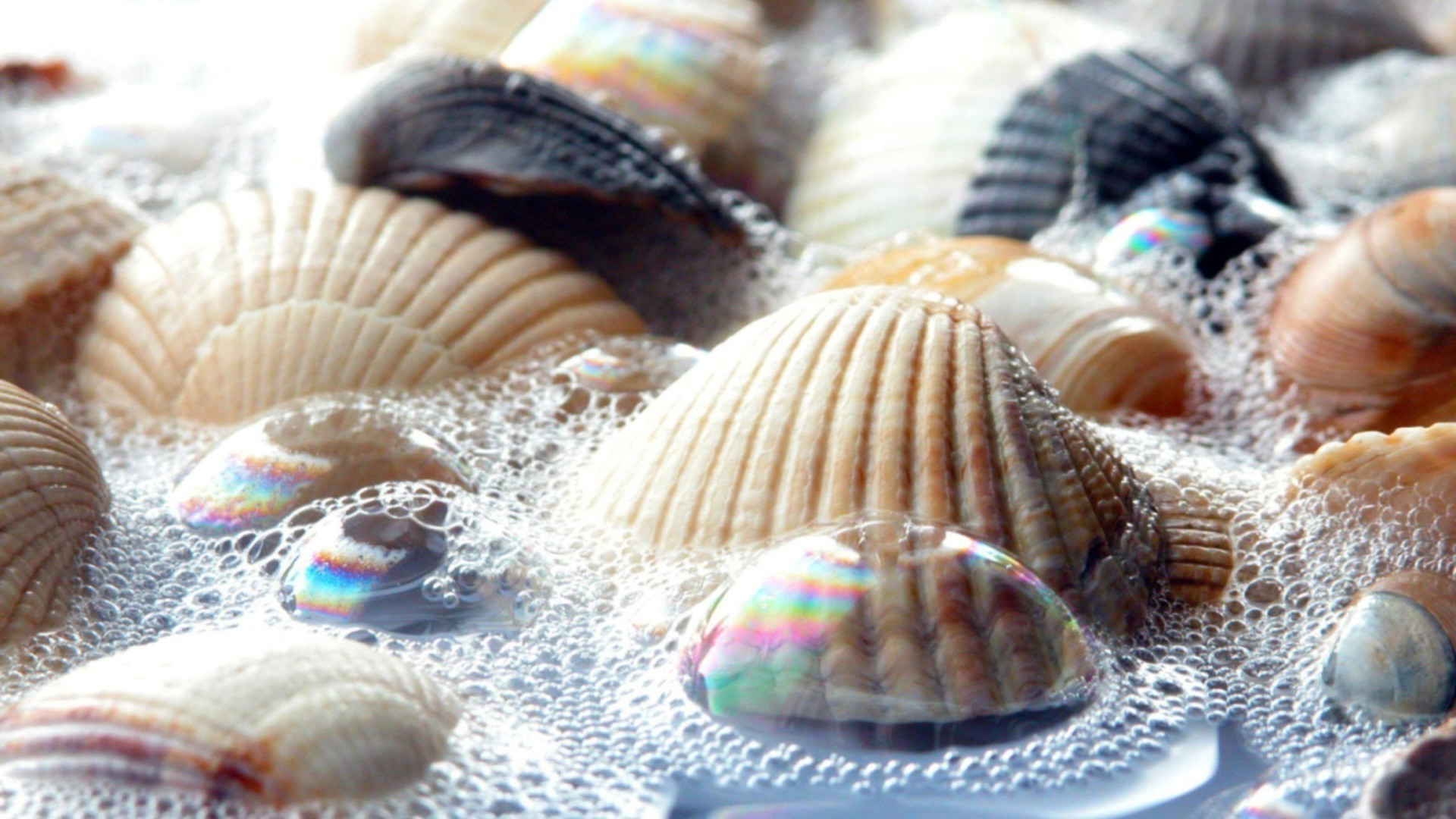 Seashell Download Wallpaper