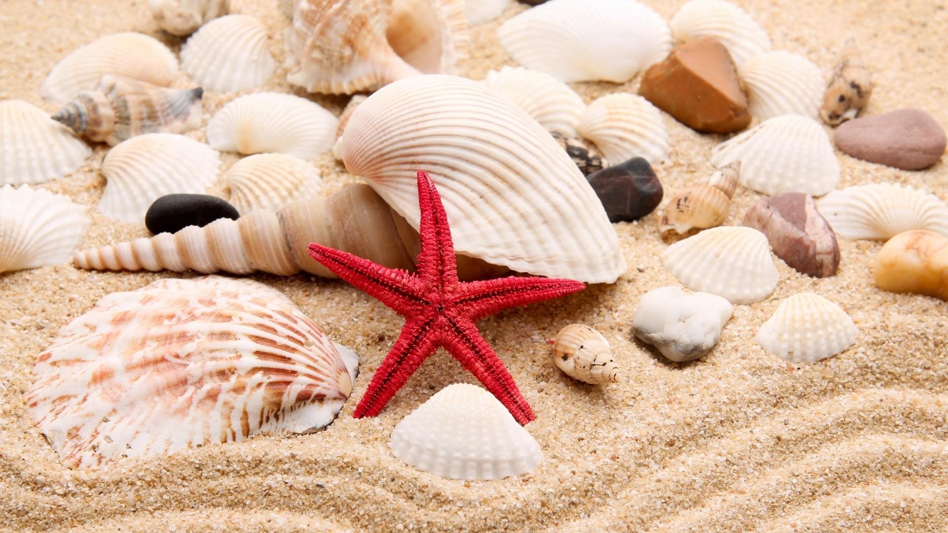 Seashell Pic
