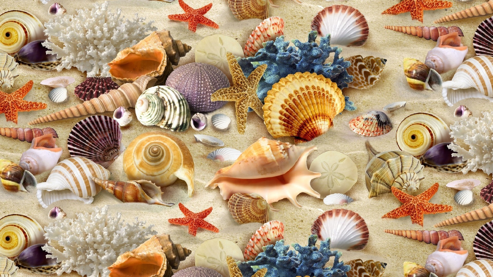 Seashell Wallpaper and Background
