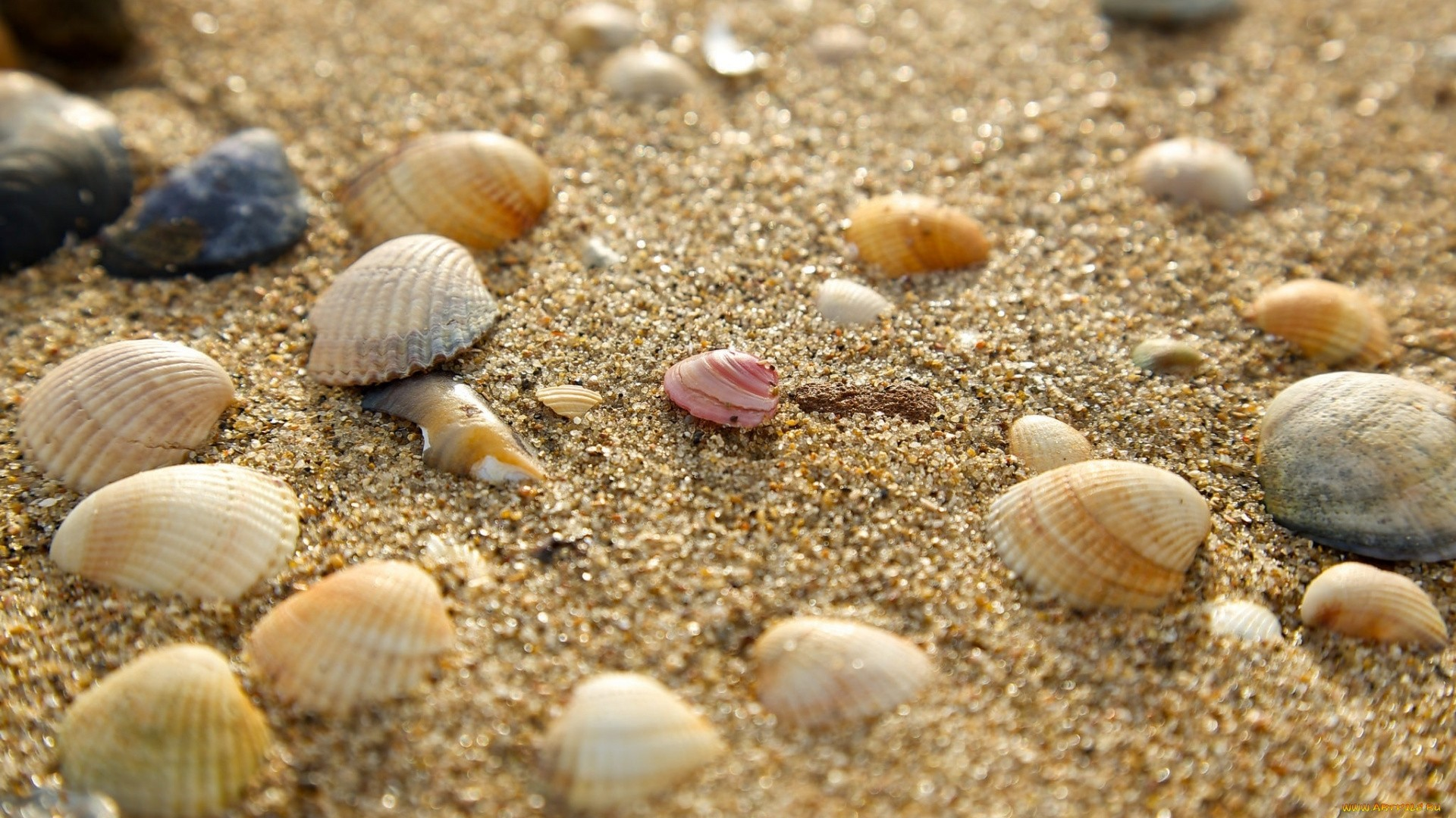 Seashell Wallpaper theme