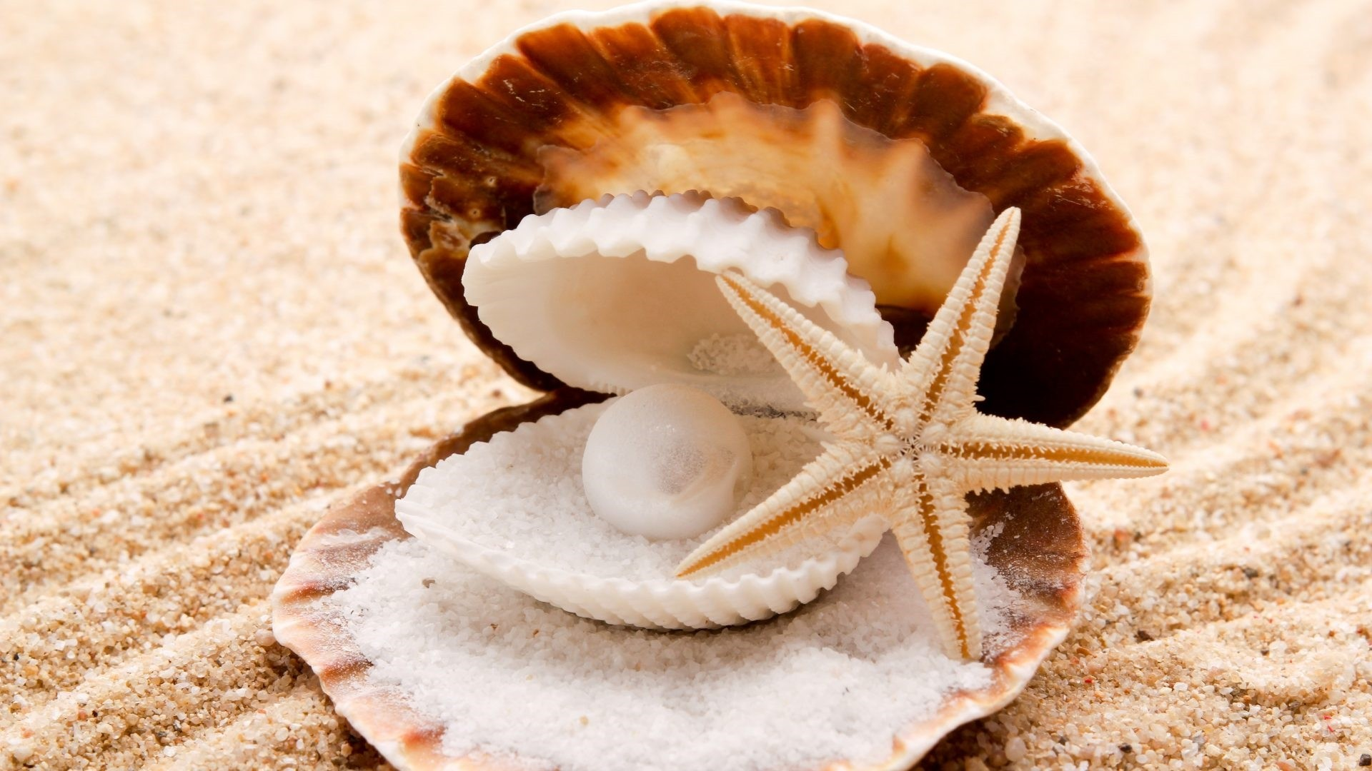 Seashell Free Wallpaper