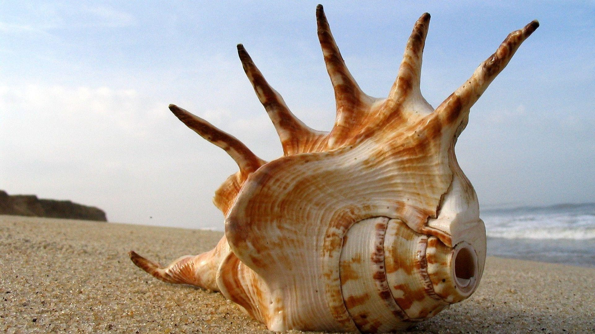 Seashell HD Download