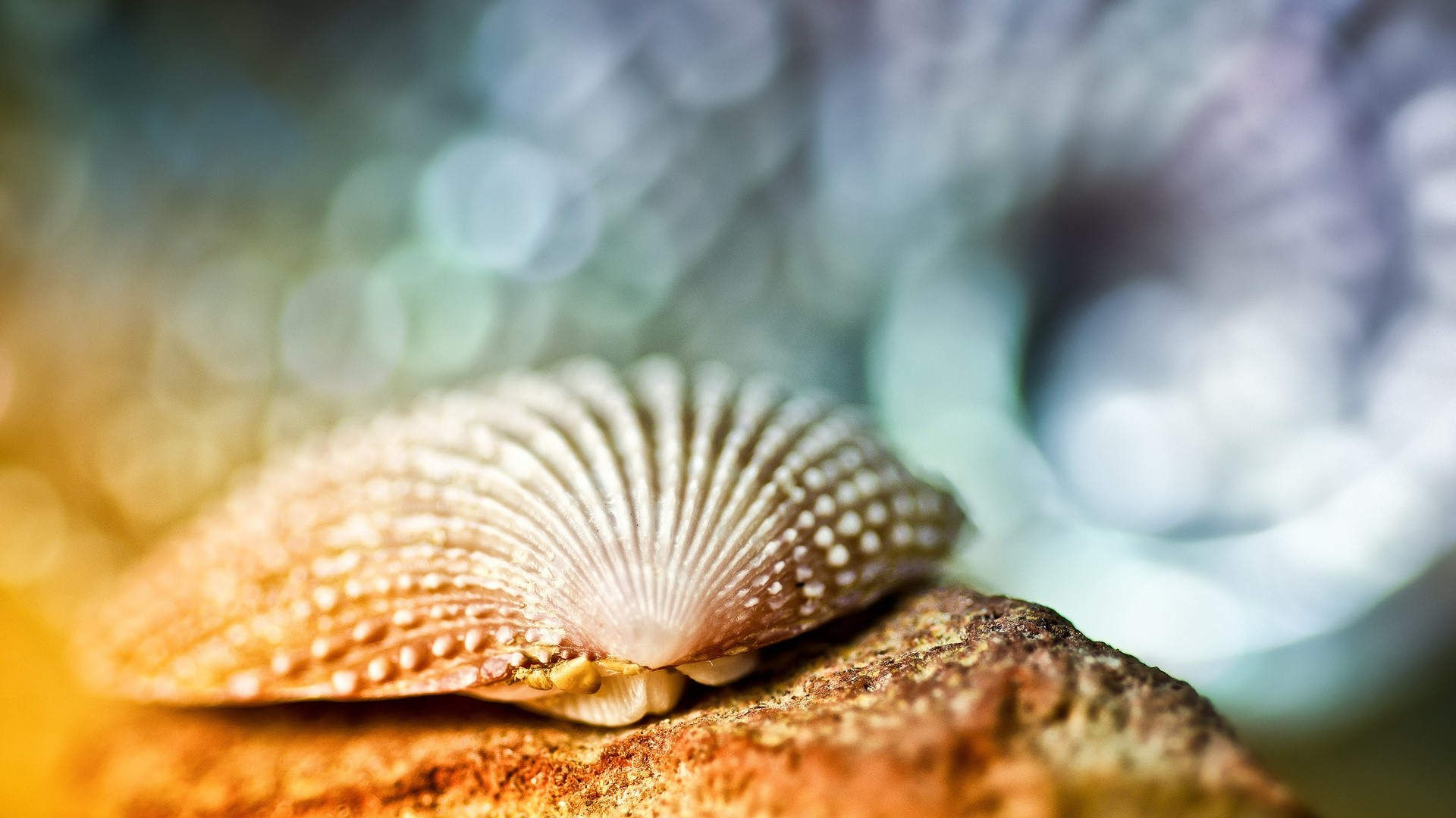 Seashell PC Wallpaper HD
