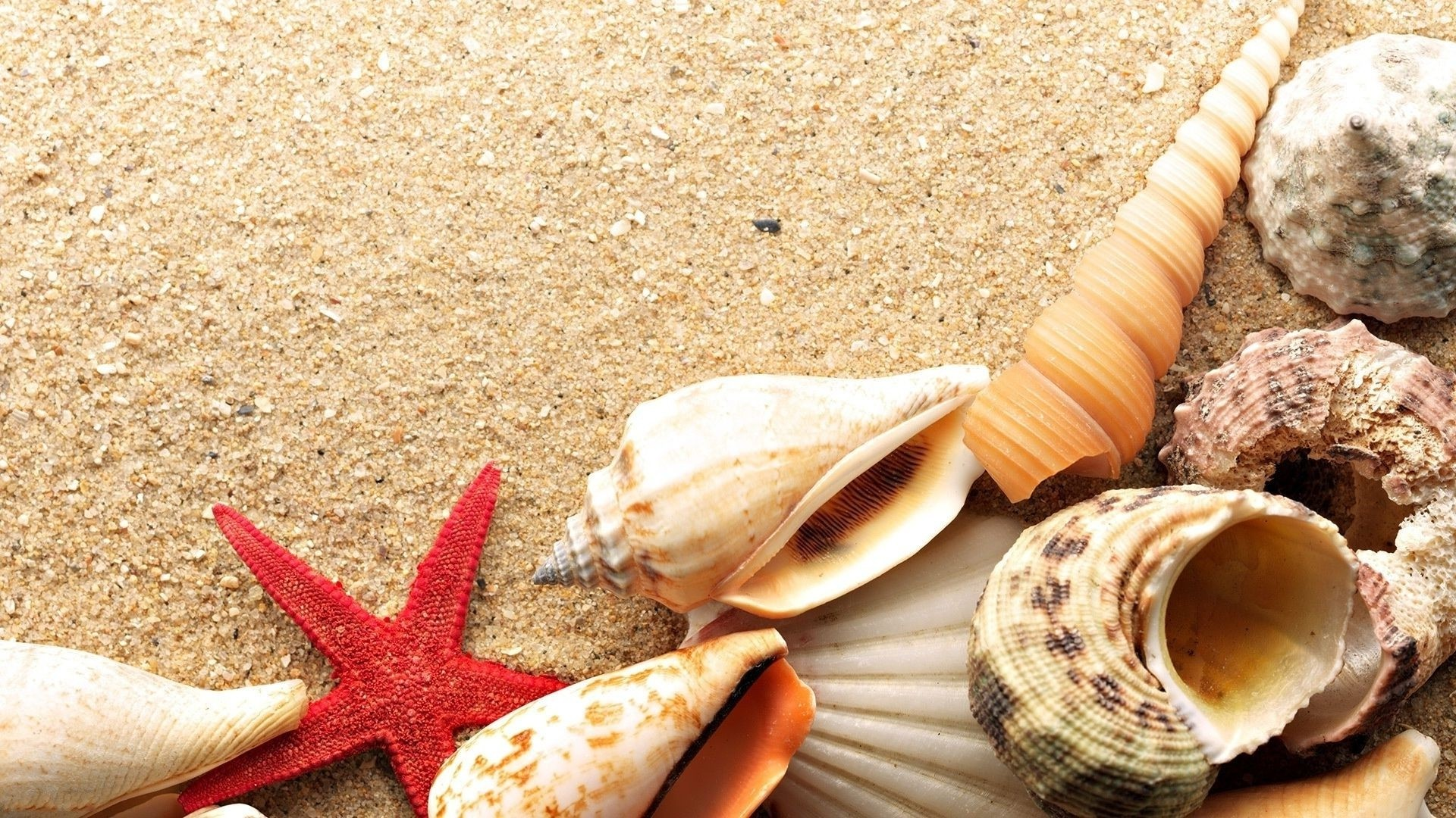 Seashell wallpaper photo hd