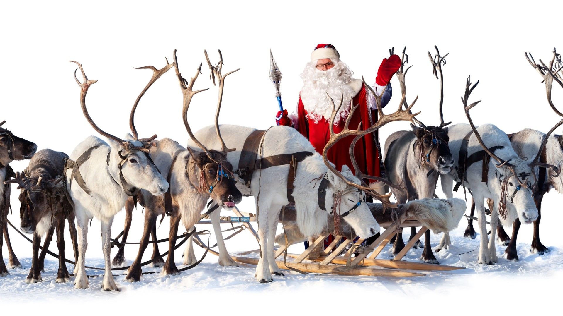 Reindeer High Quality