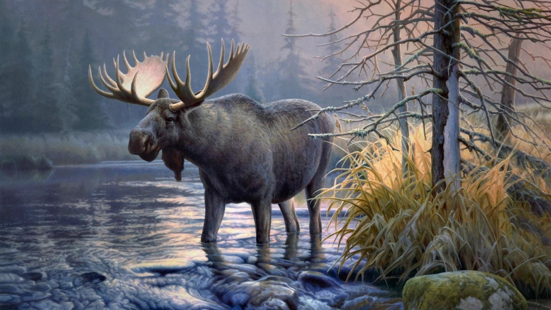 Elk PC Wallpaper HD