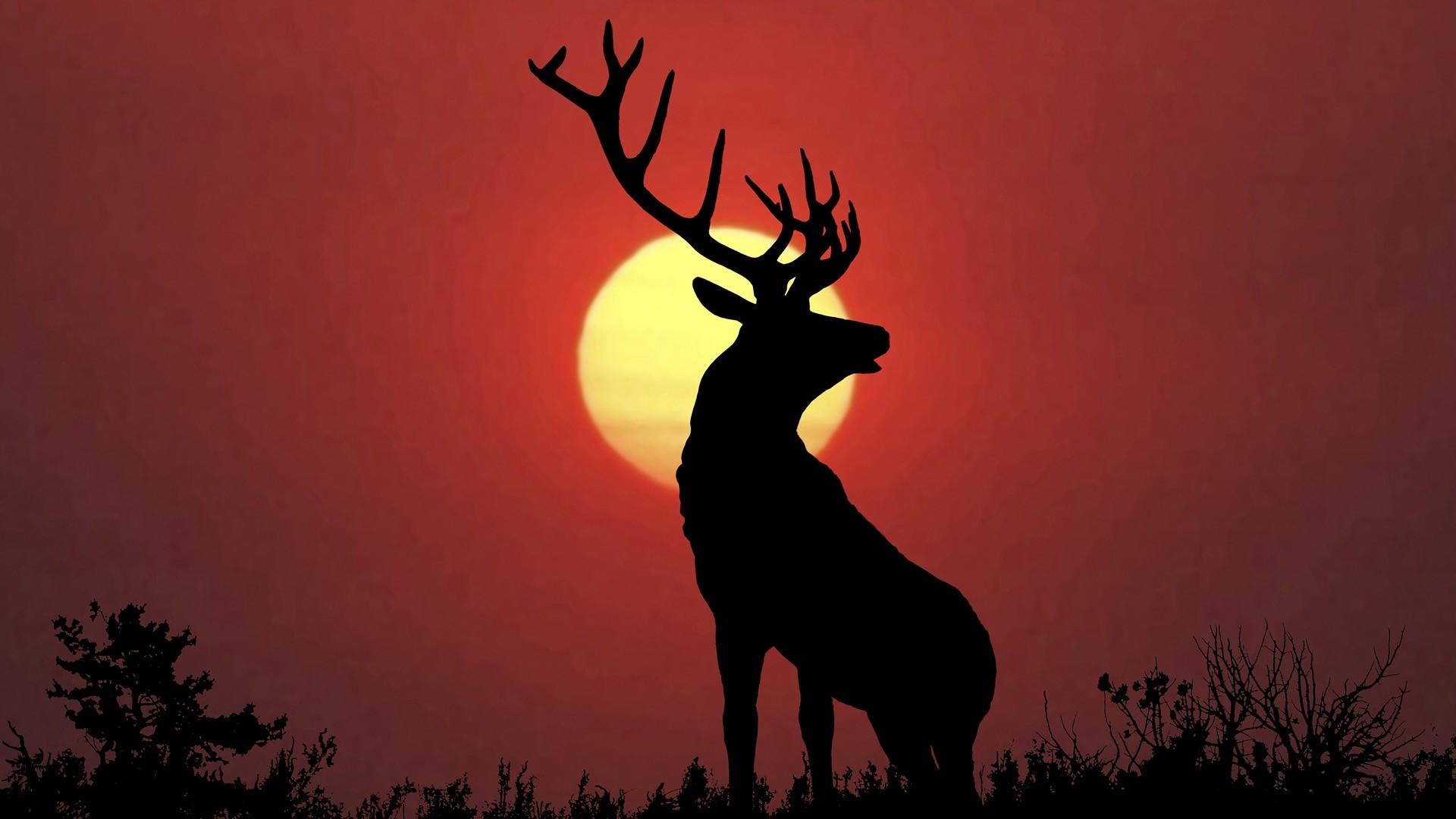 Elk Background Wallpaper