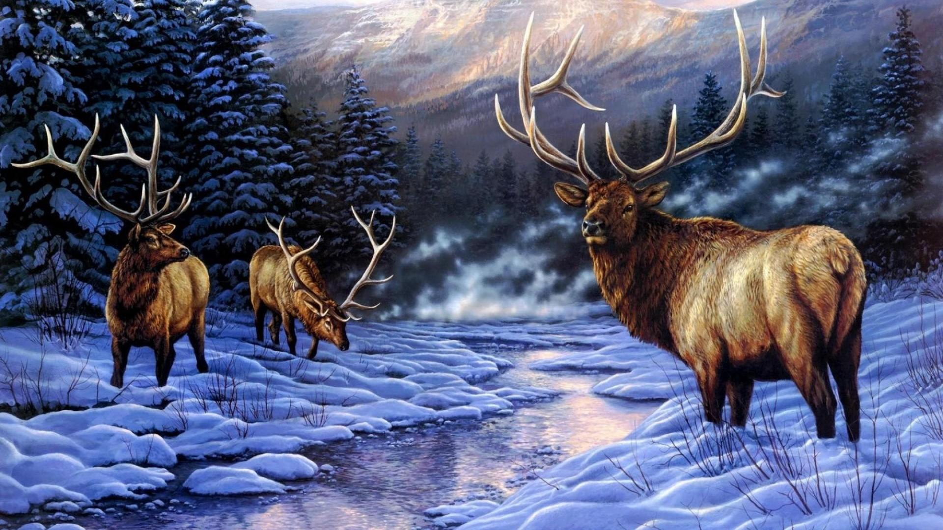 Elk hd wallpaper download