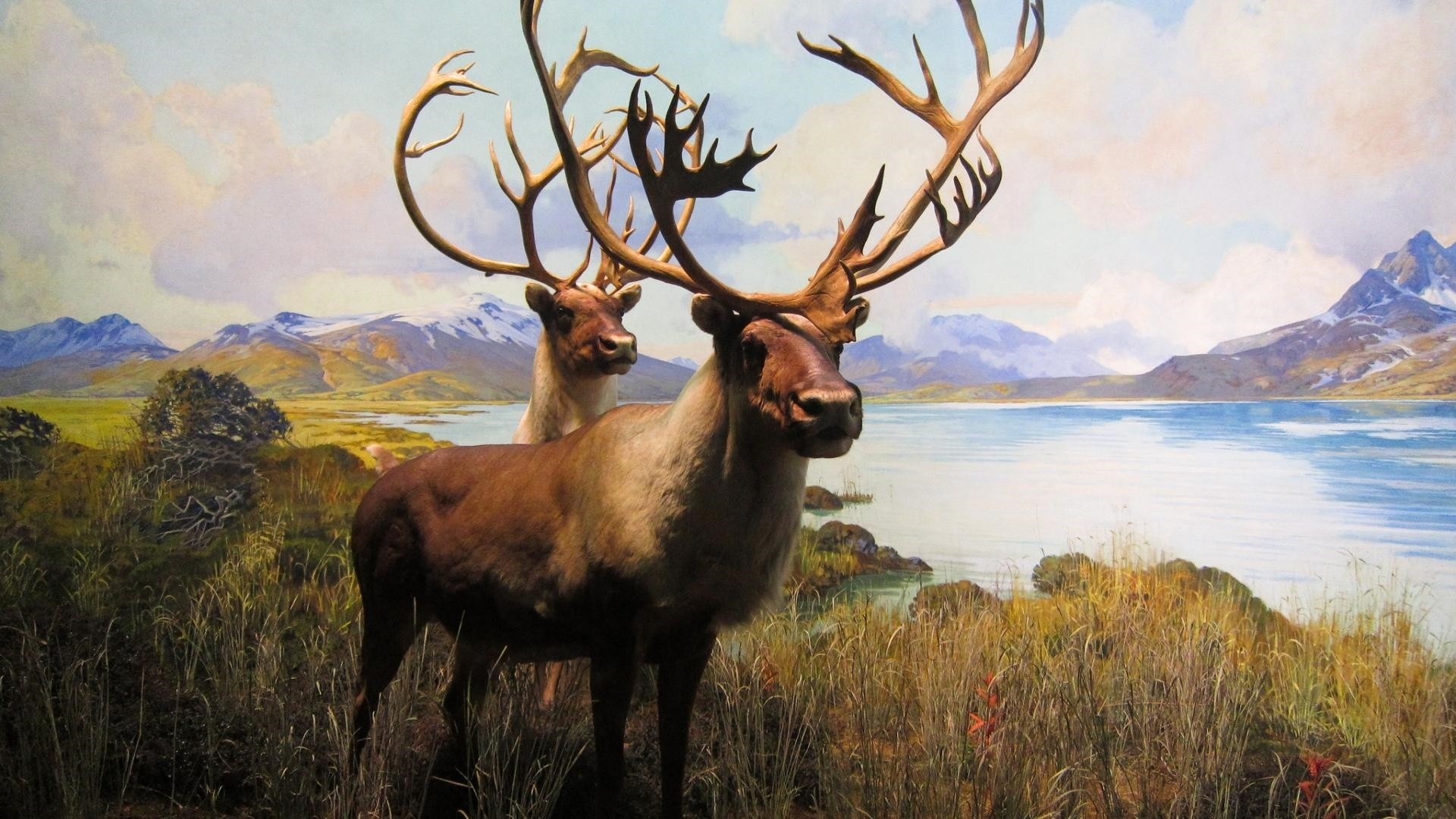 Elk Wallpaper image hd
