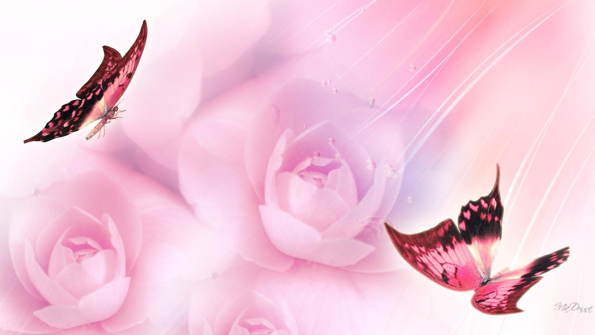 Pink Butterfly HD Wallpaper