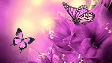 Pink Butterfly Wallpaper and Background