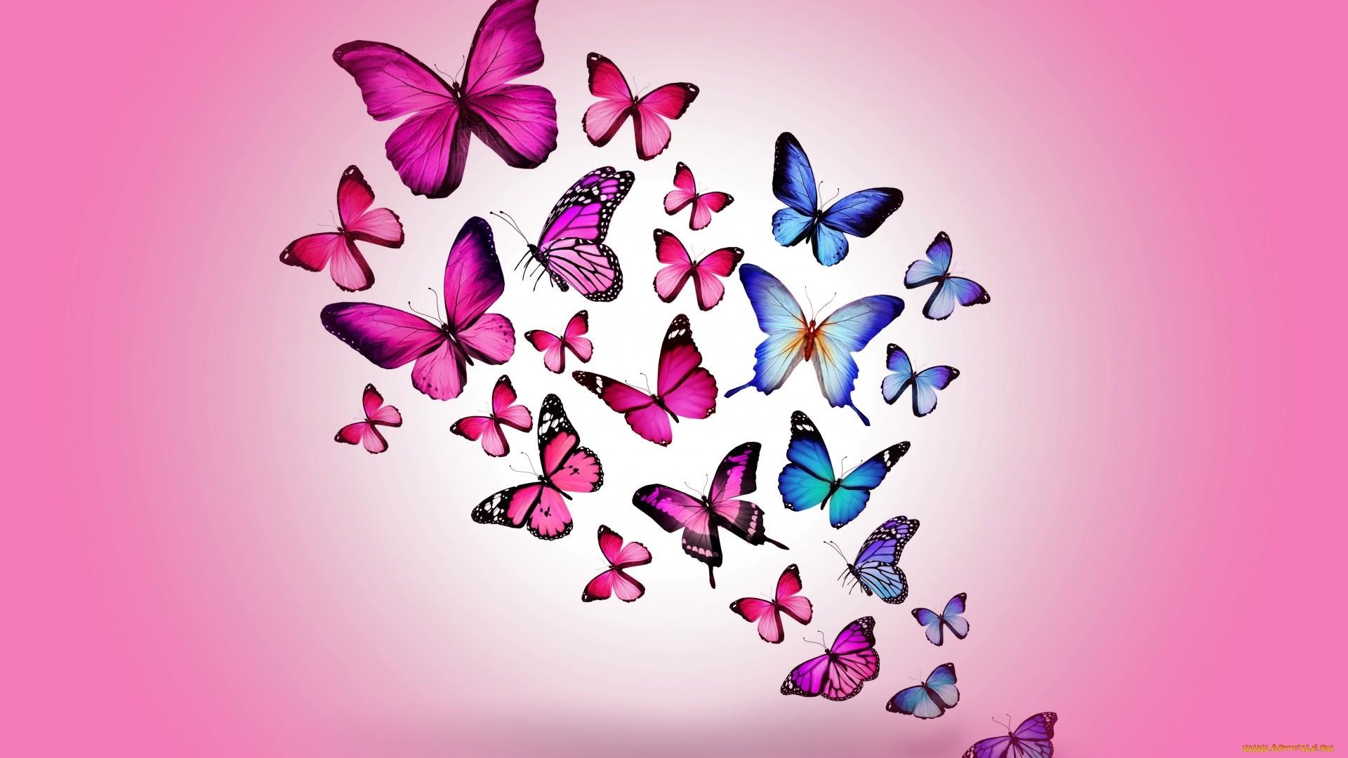 Pink Butterfly Full HD Wallpaper