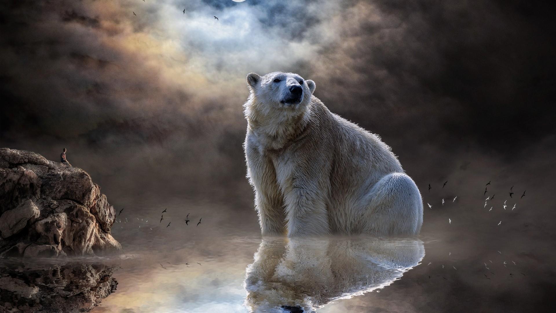 Polar Bear Background Wallpaper