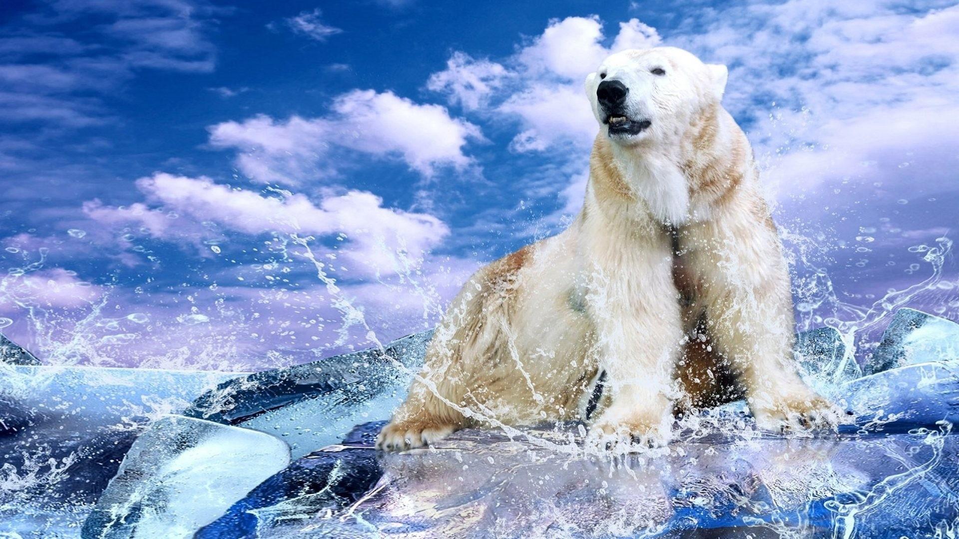 Polar Bear Pic