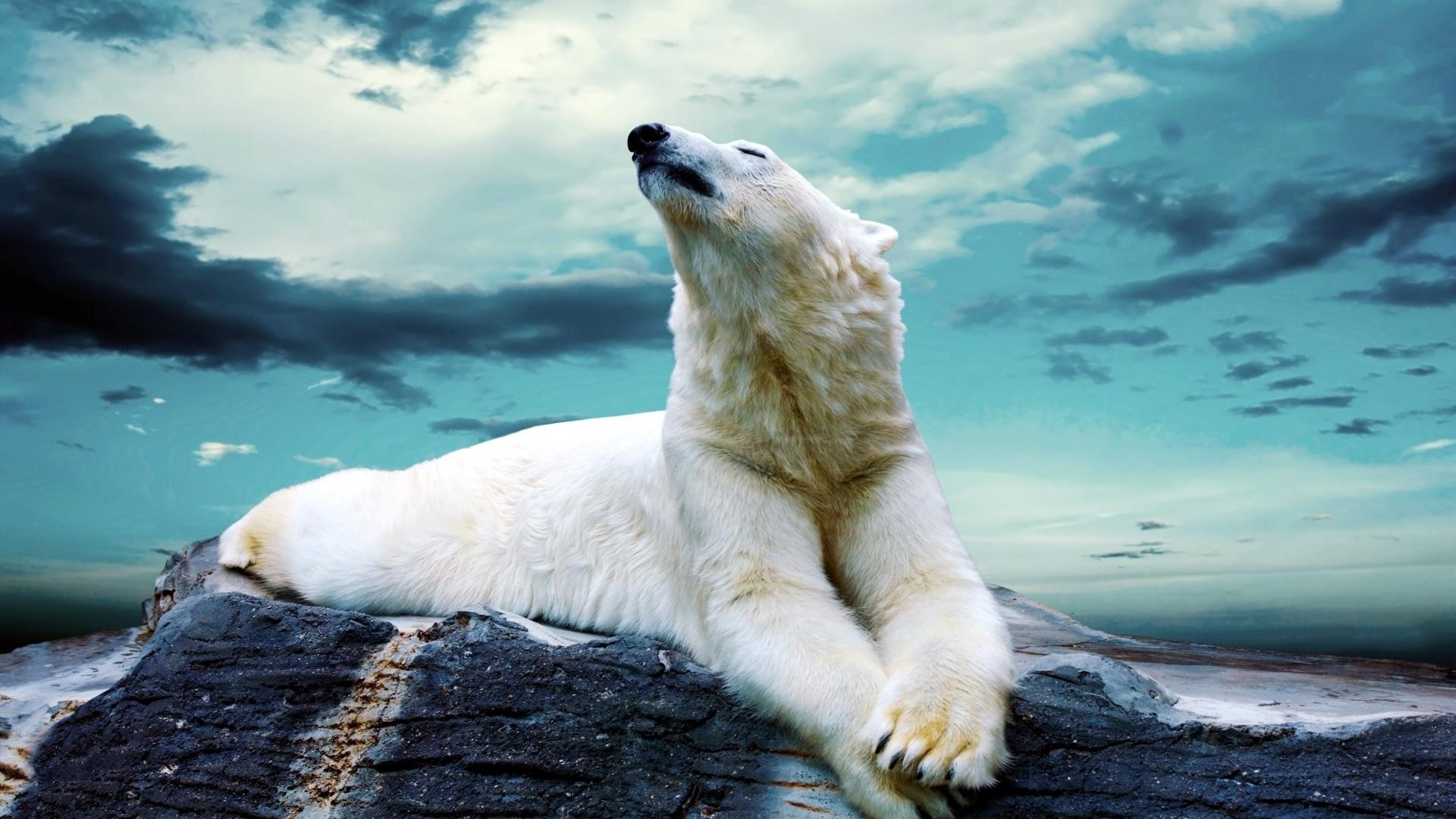 Polar Bear Free Wallpaper