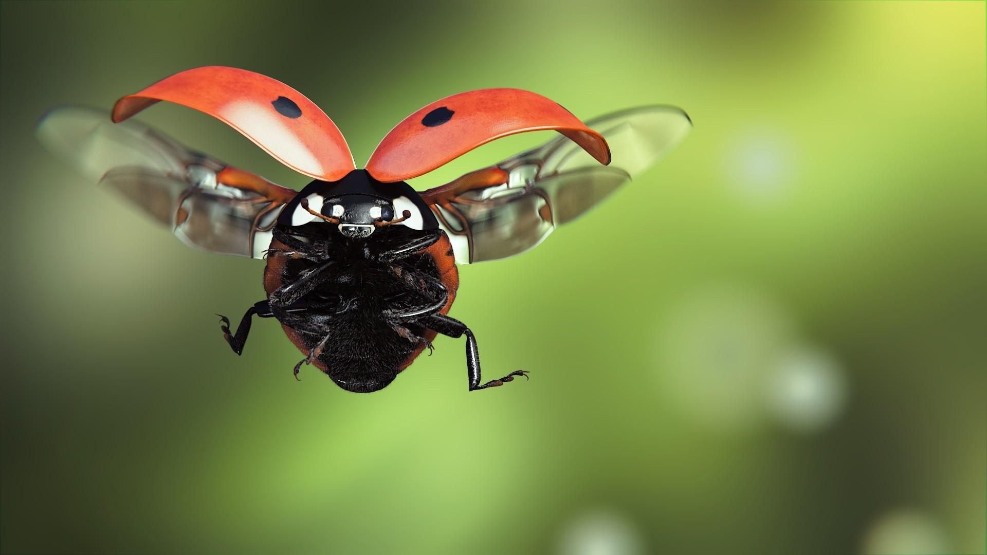 Fly Desktop Wallpaper