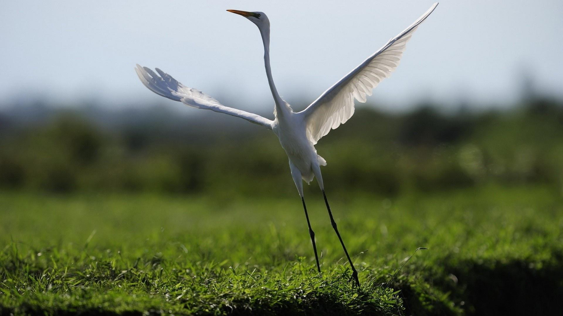 Crane Picture