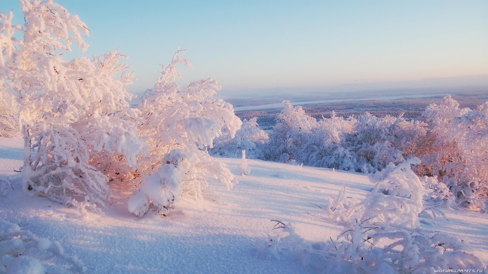 Snowy Morning Wallpaper