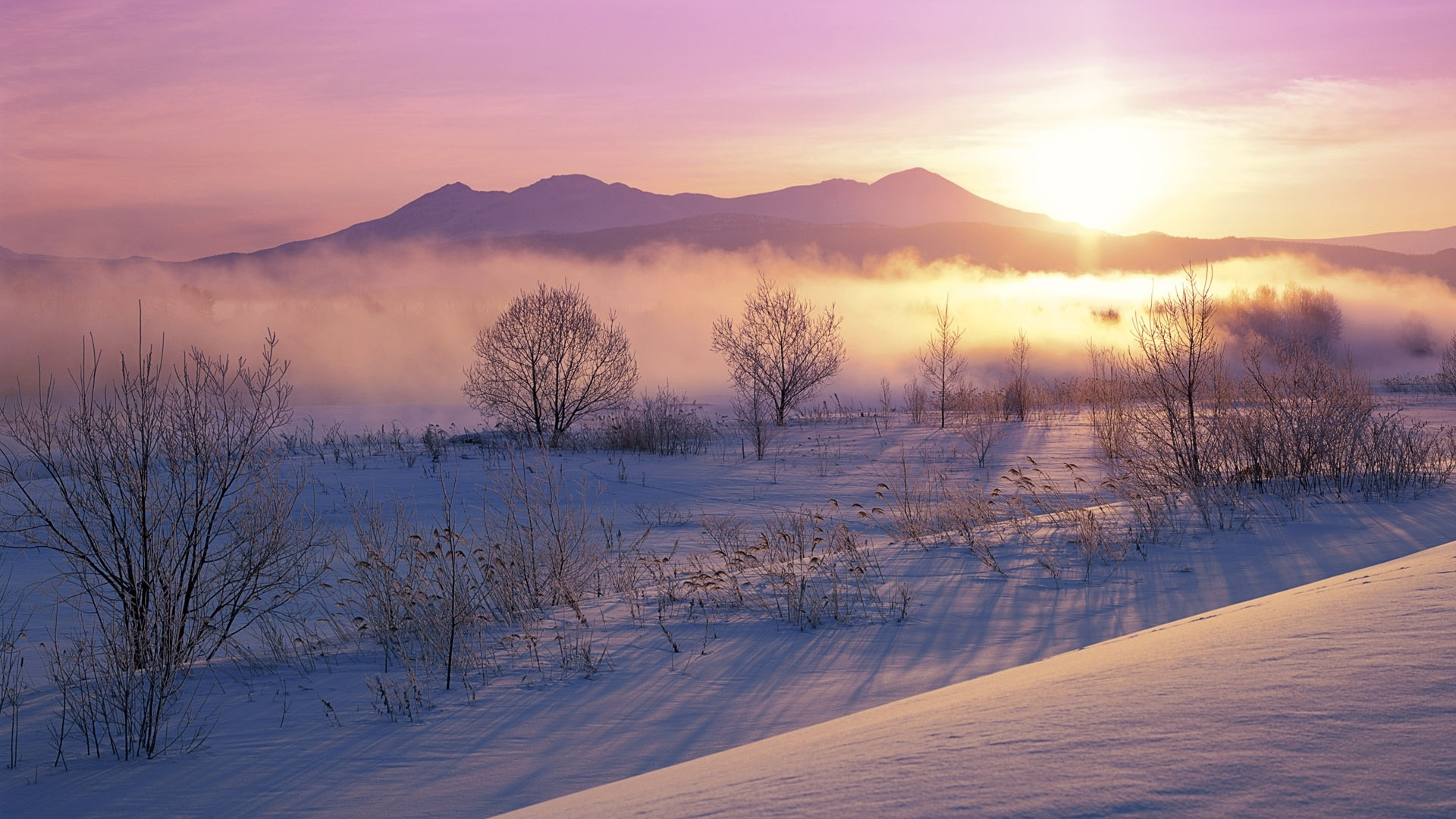 Snowy Morning HD Wallpaper