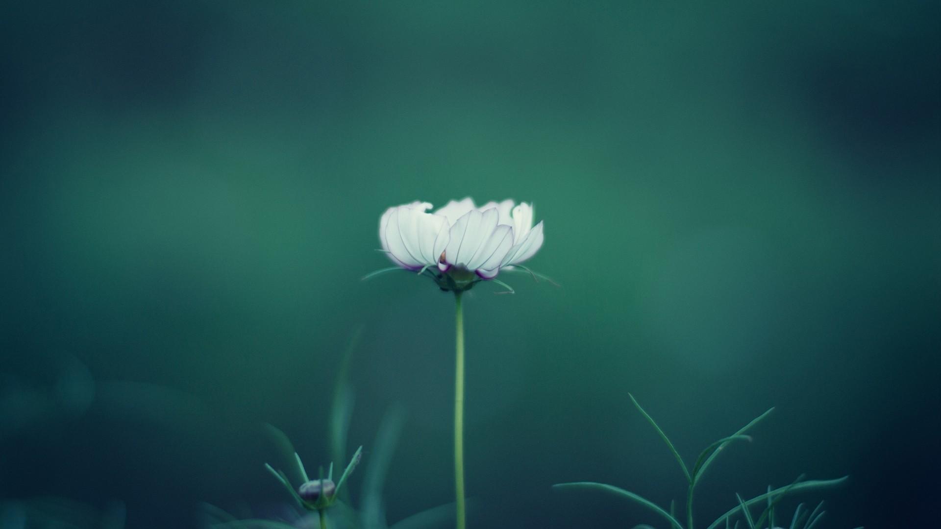 Flower Minimalist HD Wallpaper