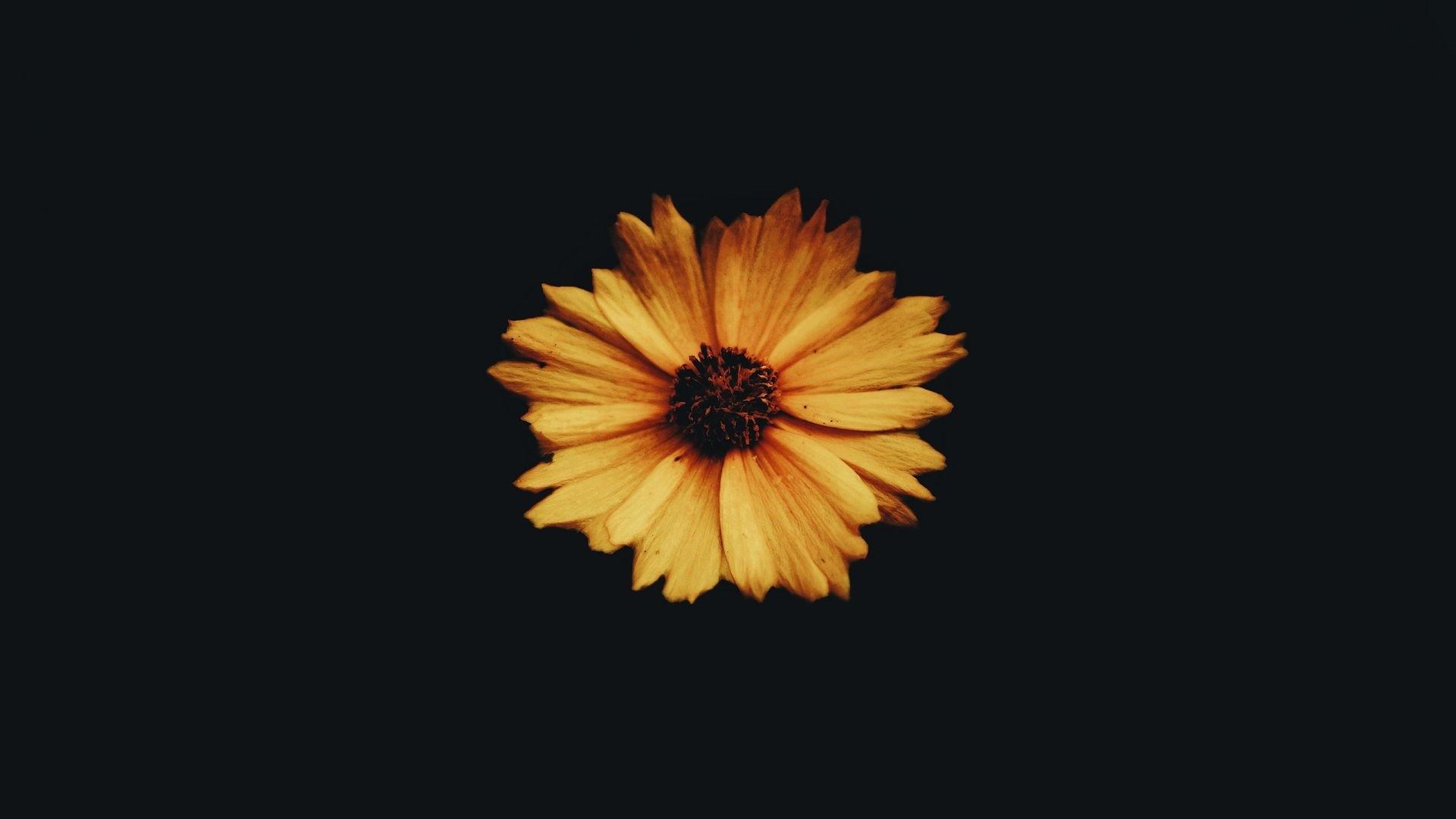 Flower Minimalist wallpaper for desktop