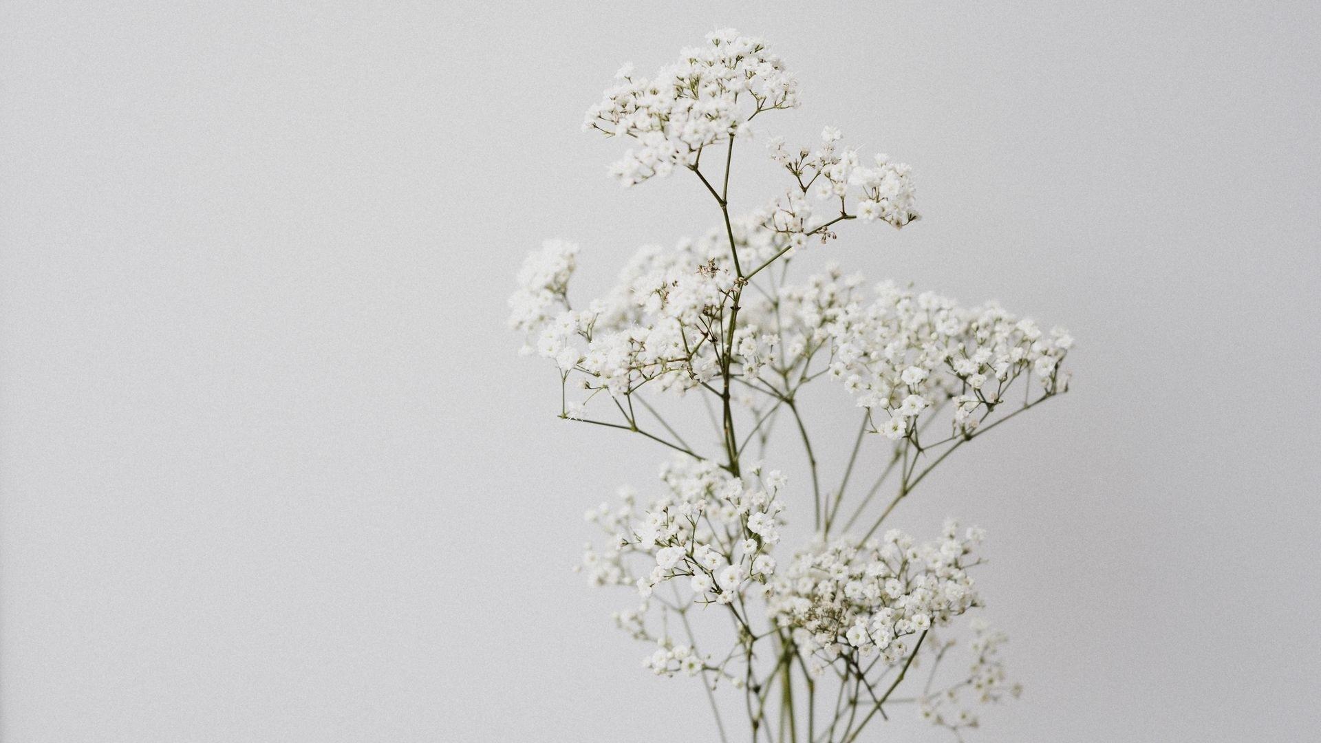 Flower Minimalist Picture