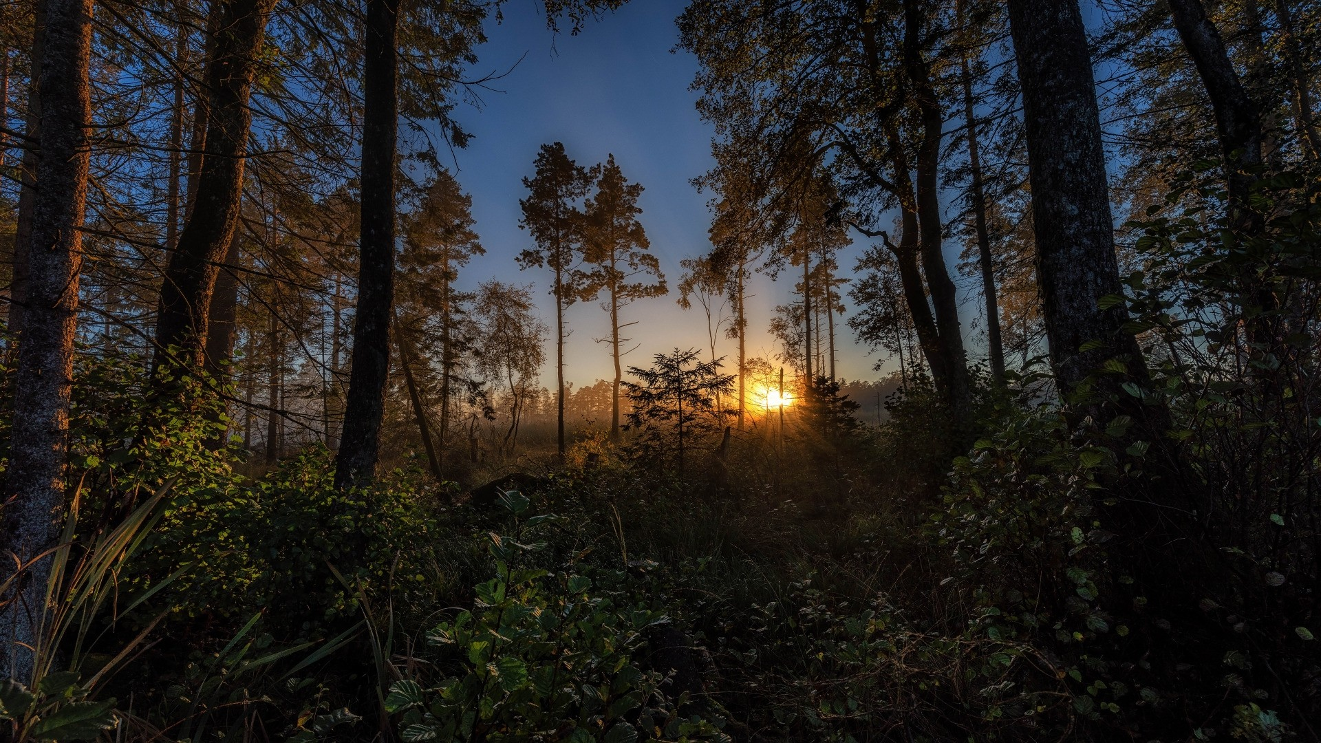 Forest Sunlight Picture