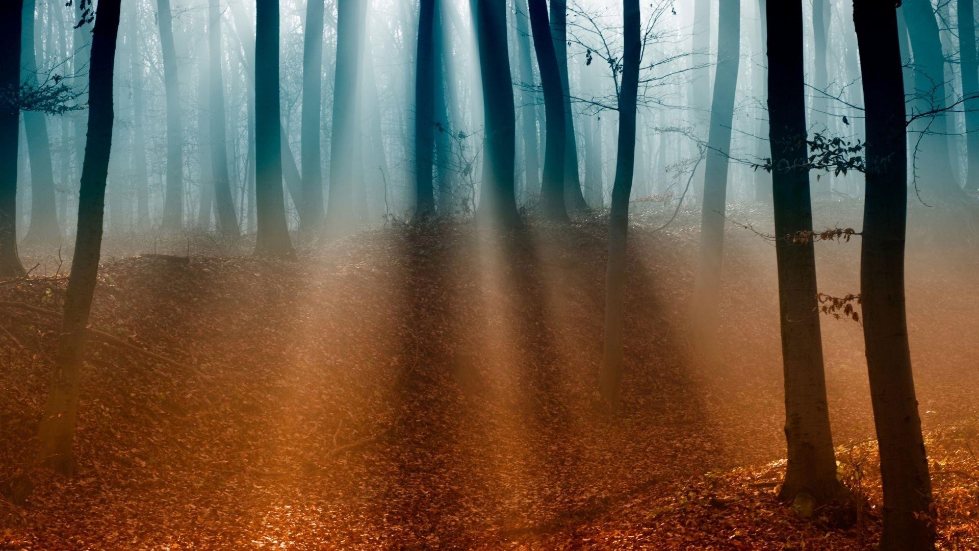 Forest Sunlight HD Wallpaper