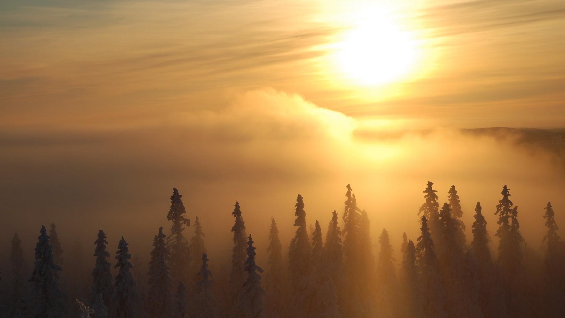 Forest Sunlight Wallpaper theme