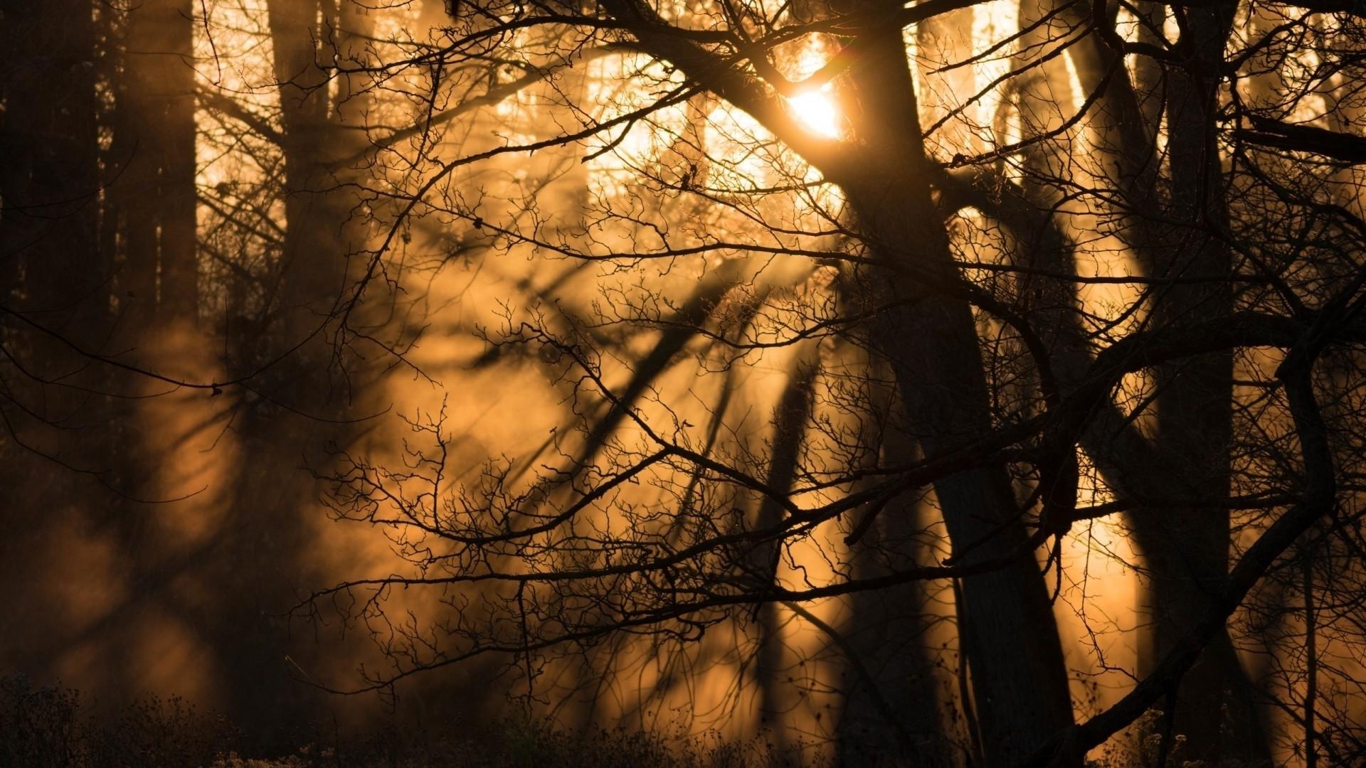 Forest Sunlight computer wallpaper