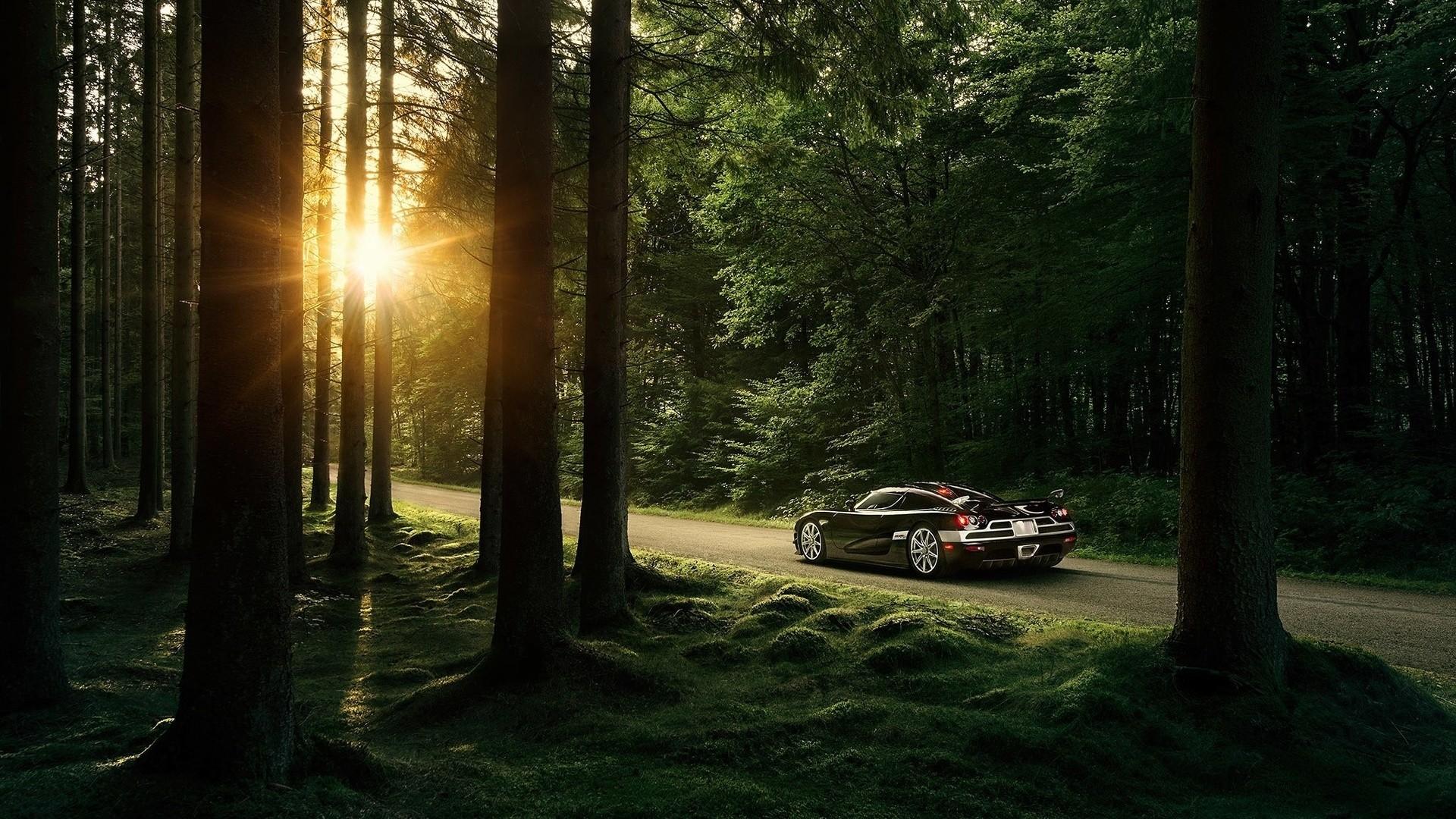 Forest Sunlight Image