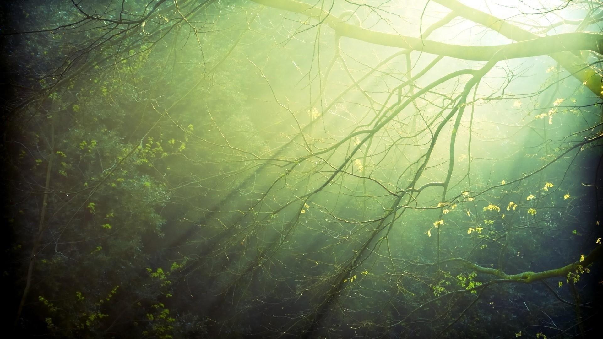 Forest Sunlight wallpaper photo hd