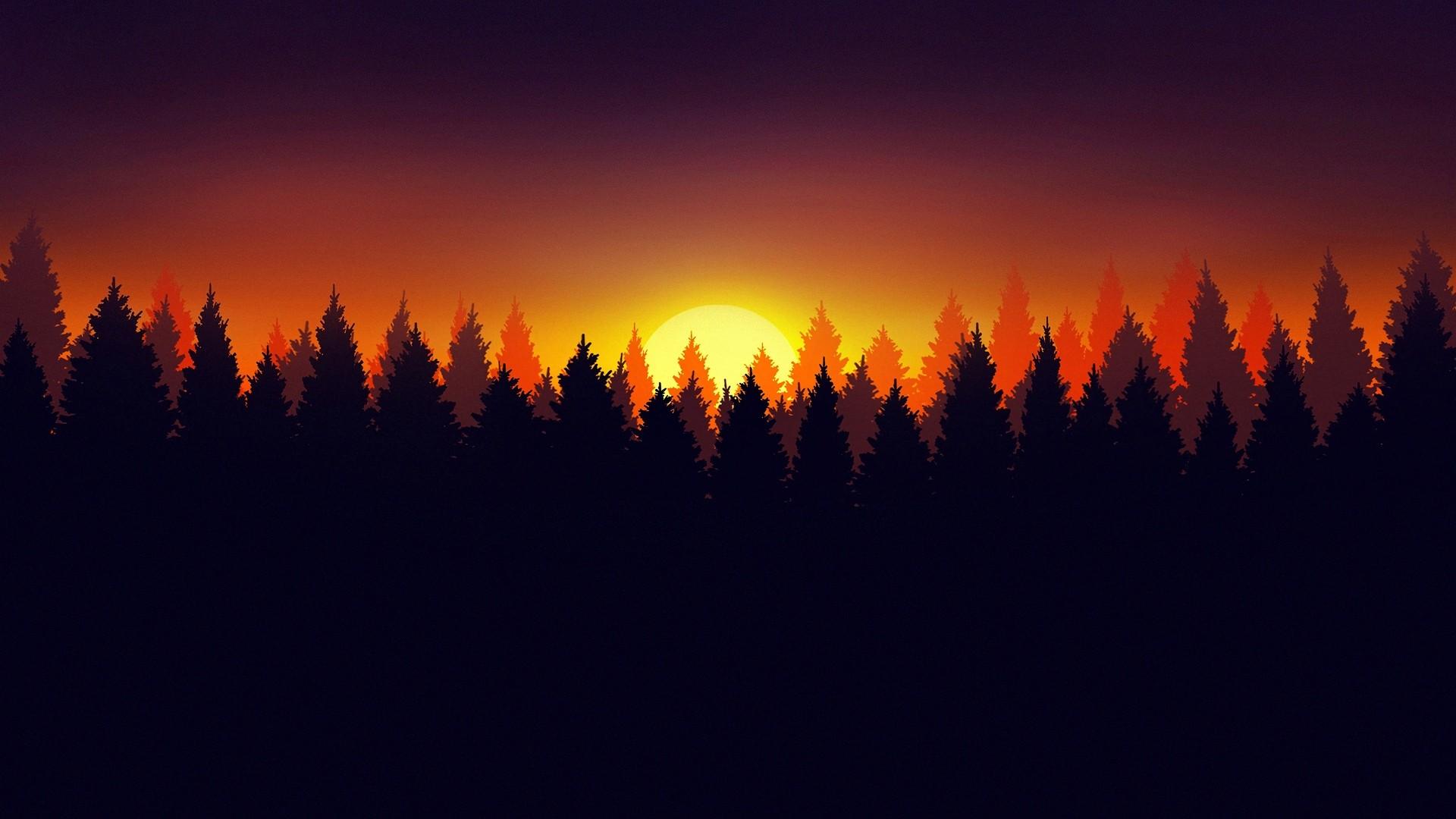 Forest Sunlight Desktop Wallpaper