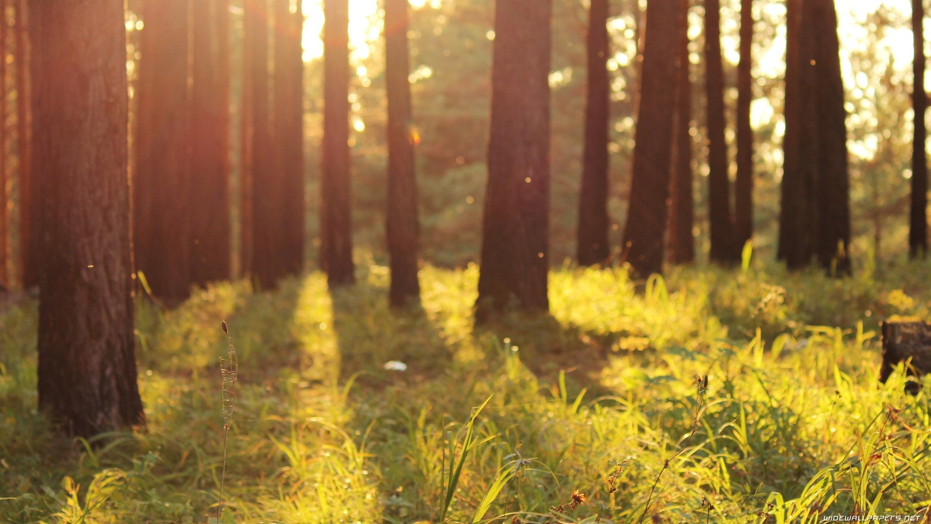 Forest Sunlight Wallpaper