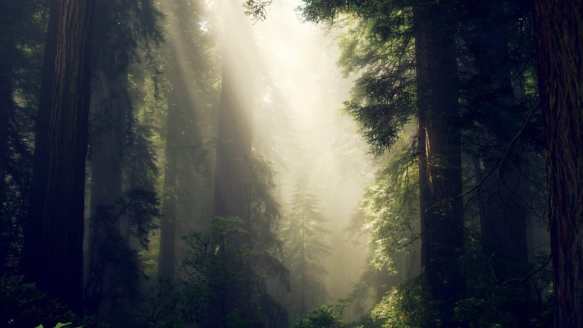 Forest Sunlight wallpaper for desktop
