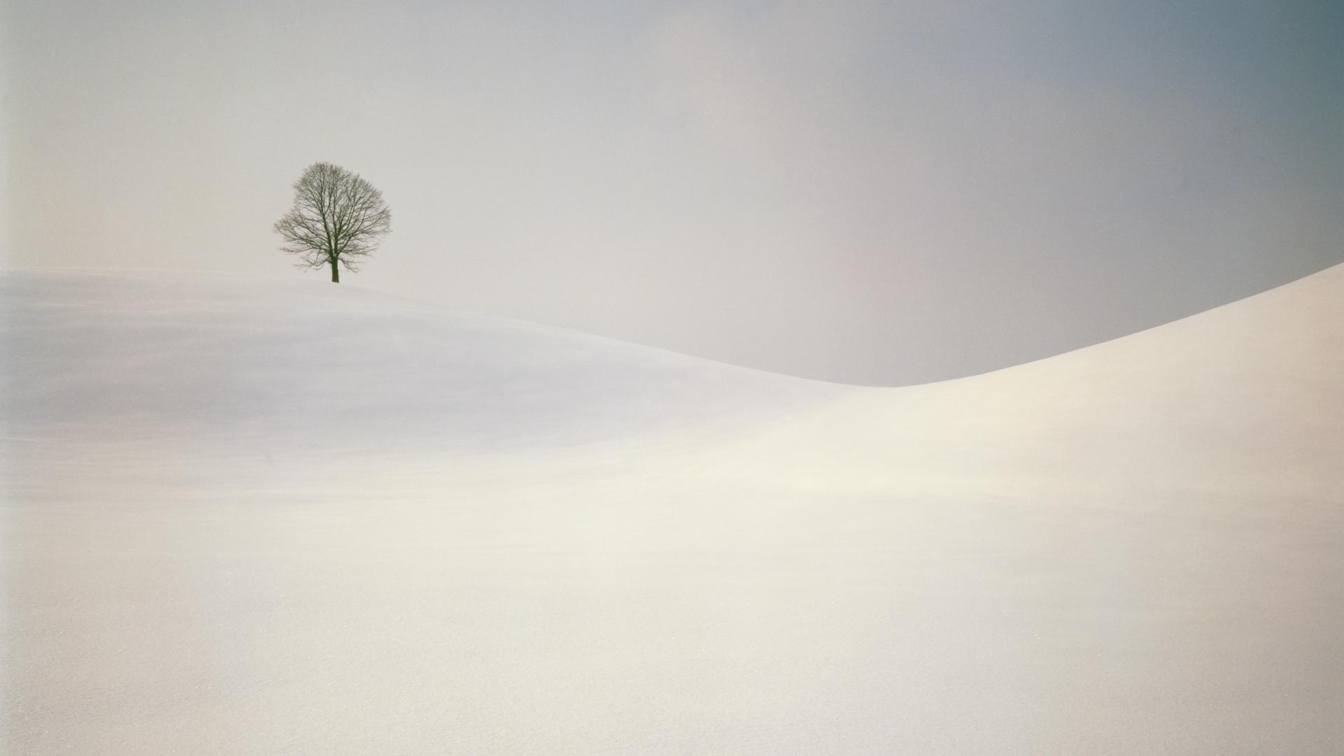 Lonely Trees Minimalist HD Wallpaper