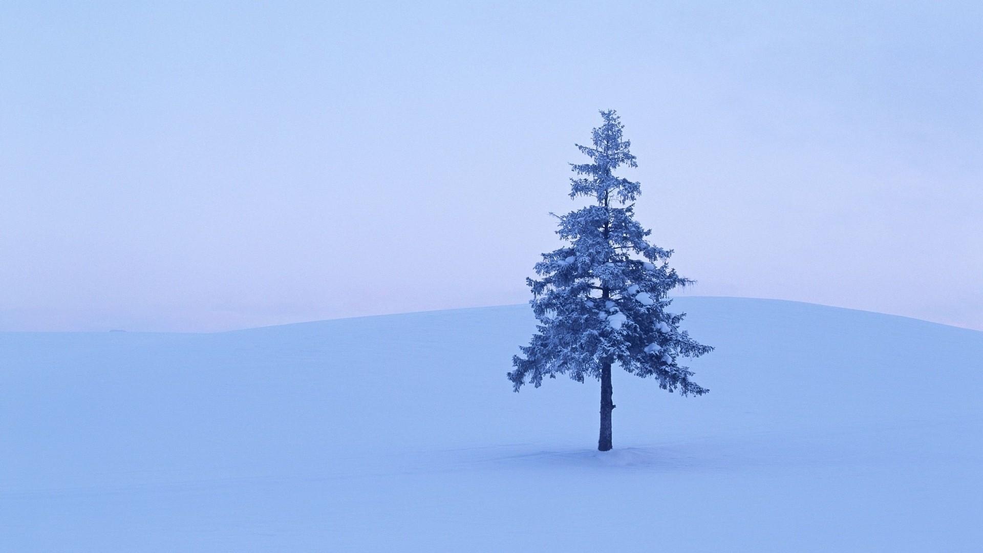 Lonely Trees Minimalist desktop wallpaper hd