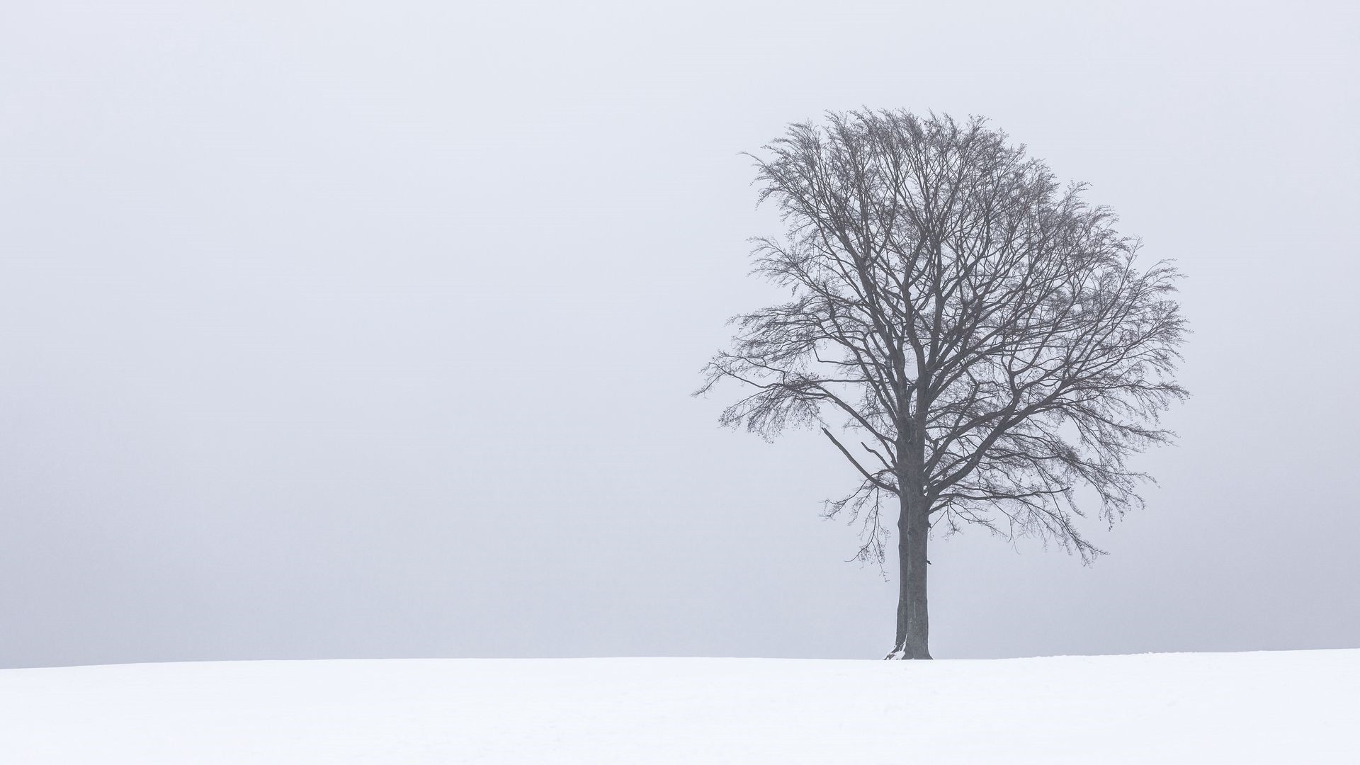 Lonely Trees Minimalist wallpaper for desktop