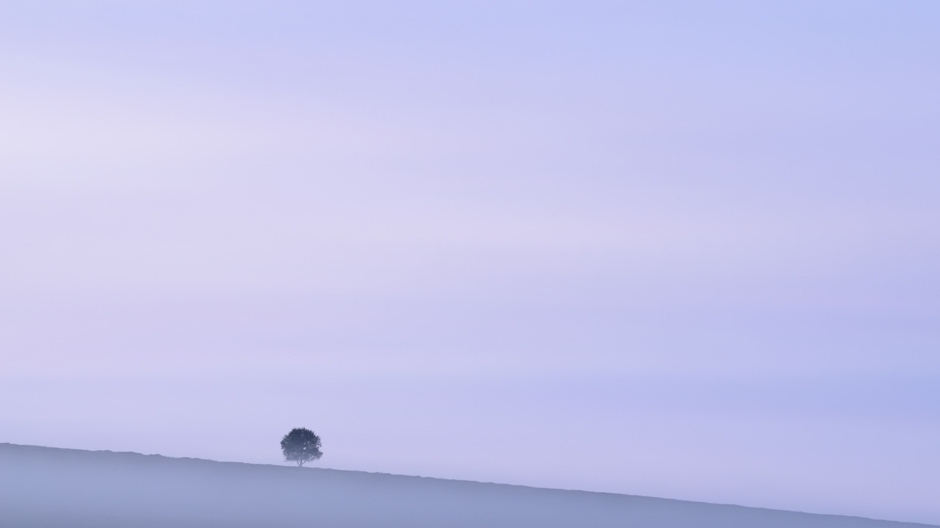 Lonely Trees Minimalist Image