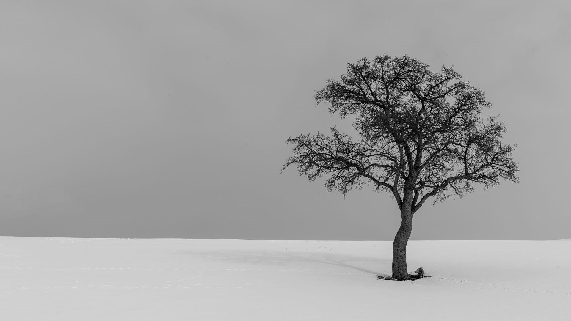 Lonely Trees Minimalist Wallpaper