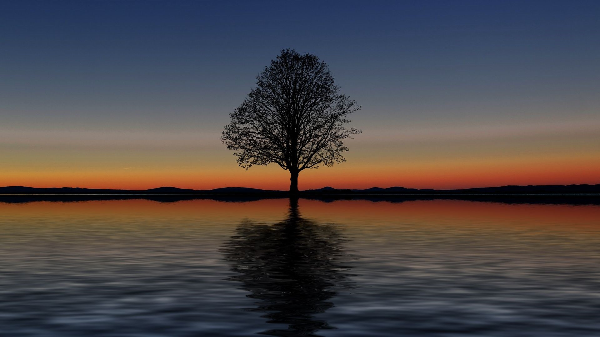 Lonely Trees Minimalist Wallpaper theme