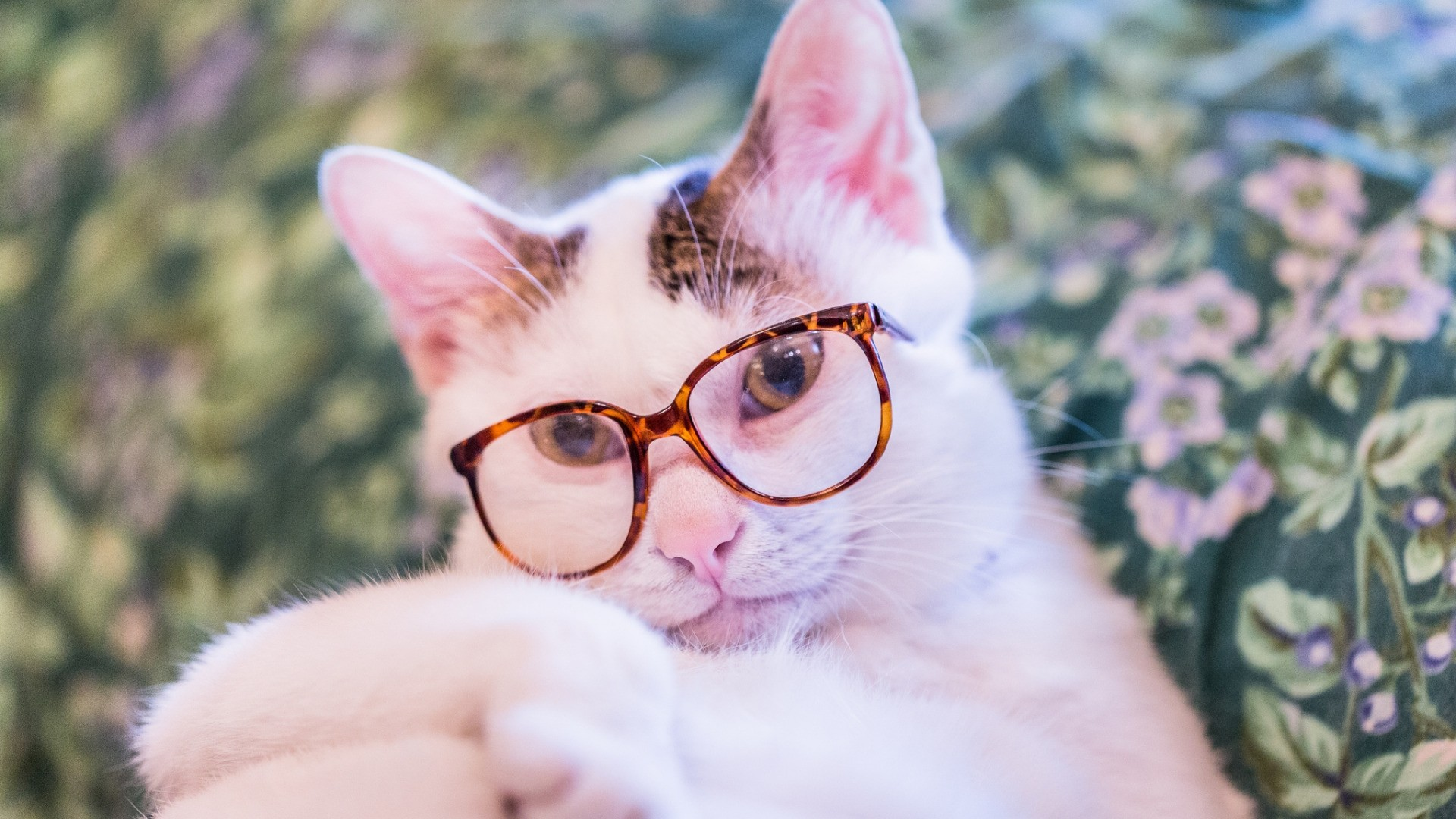 Cat With Glasses computer wallpaper